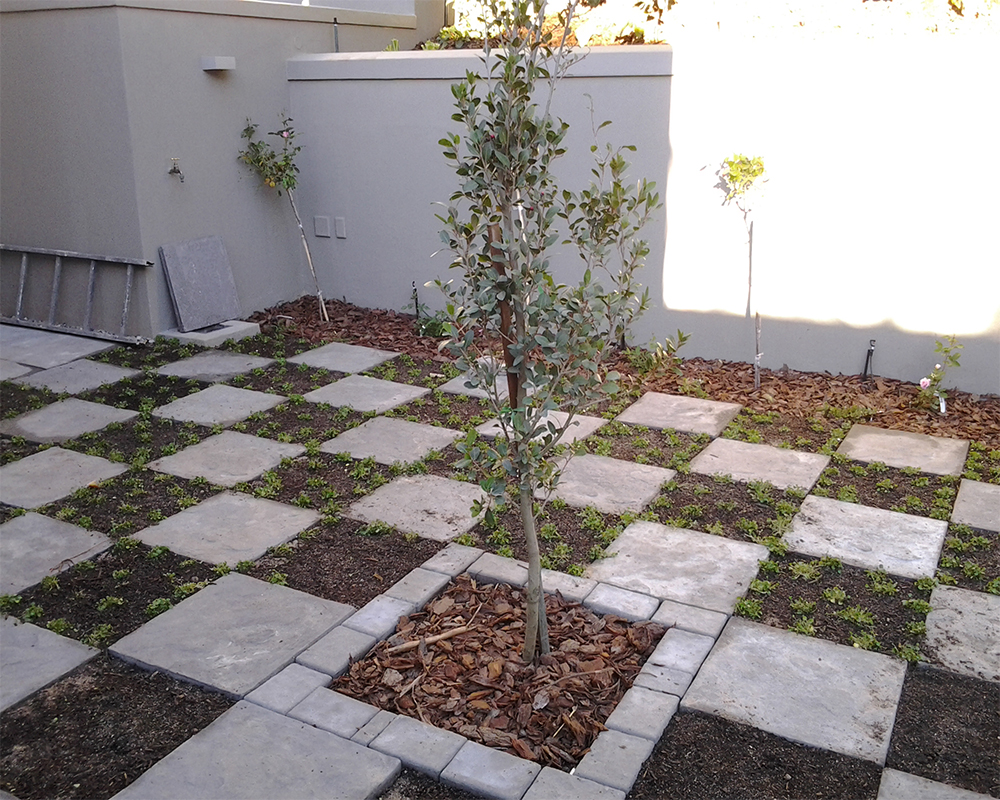 Hambisela_Horticultural_Service_House-Serfontein---Paarl06