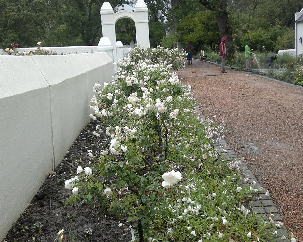 Hambisela_Horticultural_Service_ARW---Rose-Garden-extension