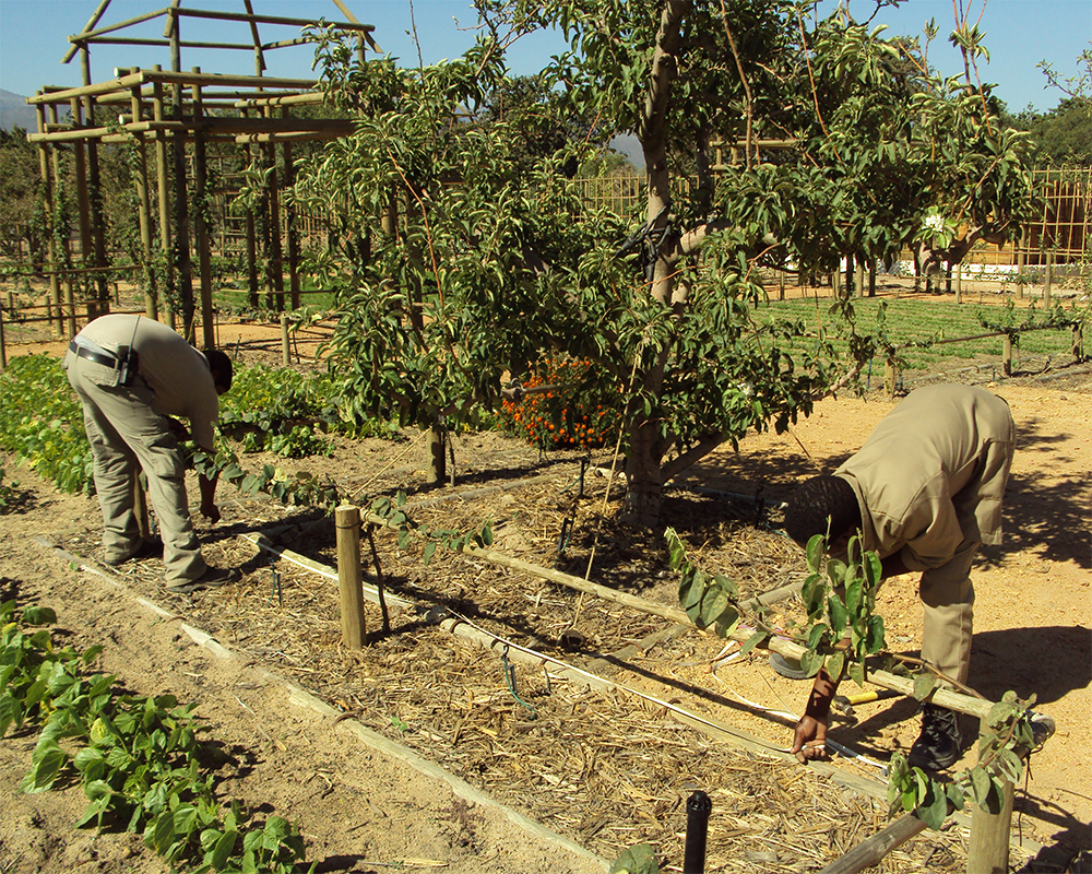 Hambisela_Horticultural_Service_Creating-ridges-to-plant-strawberries