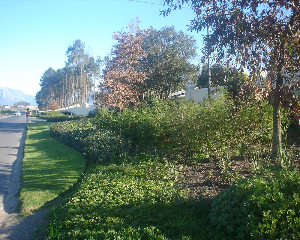 Hambisela_Horticultural_Service_Boschenmeer---Middle-Entrance