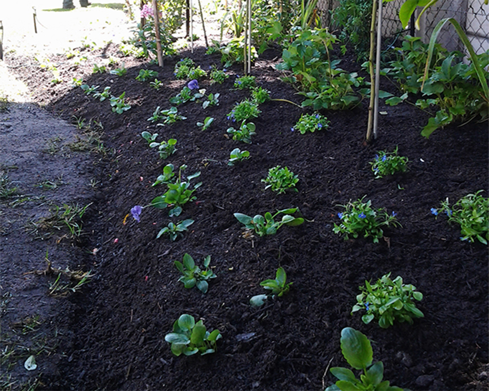 Hambisela_Horticultural_Service_House-Herholdt---Somerhaven-Retirement-Village---Somerset-West04