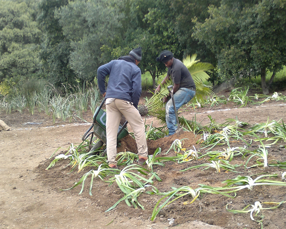 Hambisela_Horticultural_Service_House-Pauw---Transplanting-of-Cycad-and-landscaping-project
