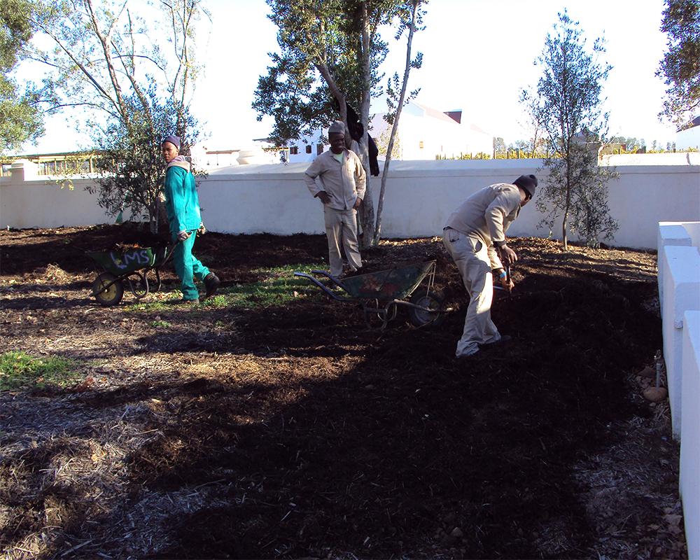 Hambisela_Horticultural_Service_Mulching-4