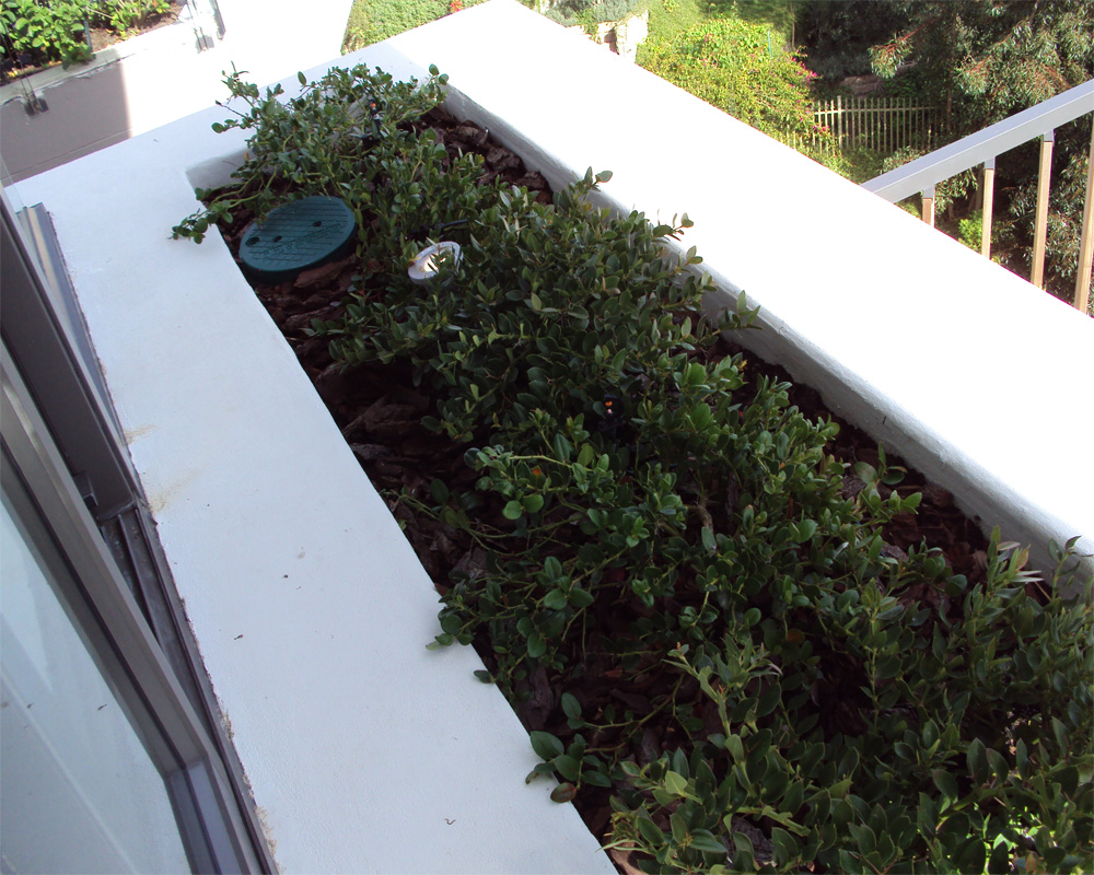 Hambisela_Horticultural_Service_Project-Leigh-Ord---planting-of-upper-balcony---flowerboxes-with-Carissa-macrocarpa---Noem---noem