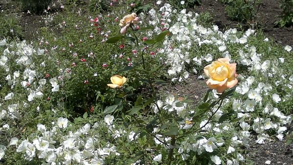 Hambisela_Horticultural_Service_Gallary_001