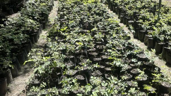 Hambisela_Horticultural_Service_Gallary_0014