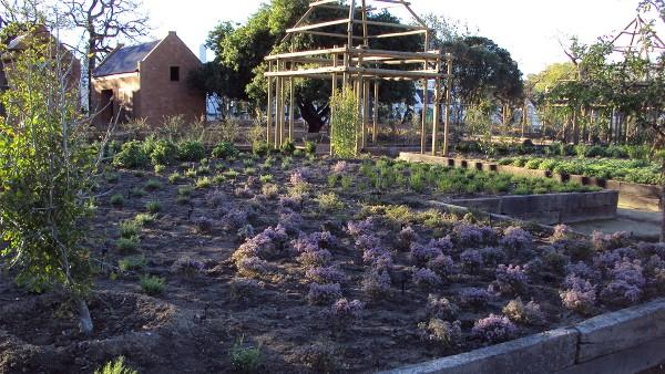 Hambisela_Horticultural_Service_Gallary_005