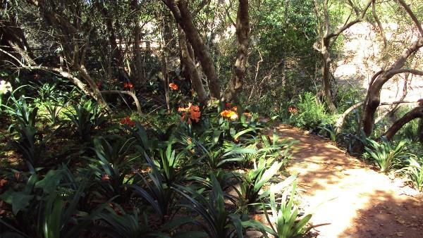 Hambisela_Horticultural_Service_Gallary_006