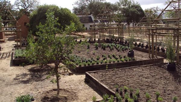 Hambisela_Horticultural_Service_Gallary_007